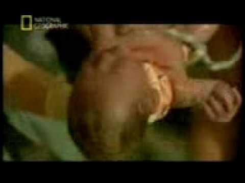 Quá trình sinh sản - Đẻ em bé