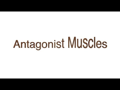 Antagonist Muscles