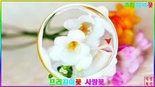 프리지어꽃 사랑에꽃~아가품 2030