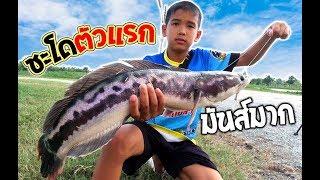เด็กตกปลา ได้ชะโด ตัวแรกแล้ว !!! | เด็กตกปลา