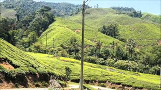 Malaysia -- Cameron Highlands   Between the tea plantations