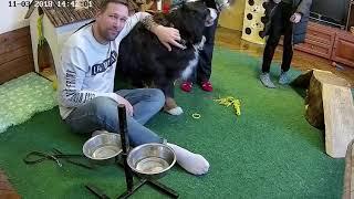🌼 Илья в гостях с семьей и собакенами 🌼 Хасята онлайн: Цветы Ванили