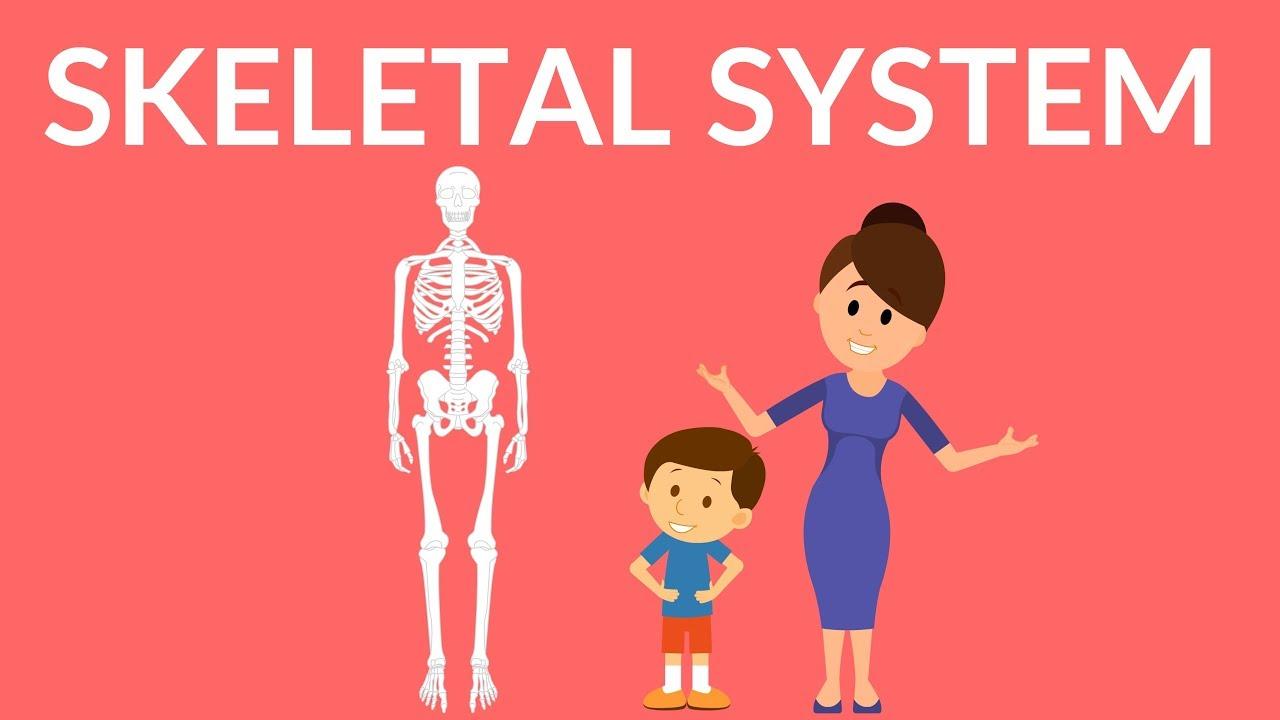 Skeletal System Human Skeleton Youtube