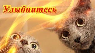 Смешное видео про животных для детей и не только Создай себе хорошее настроение