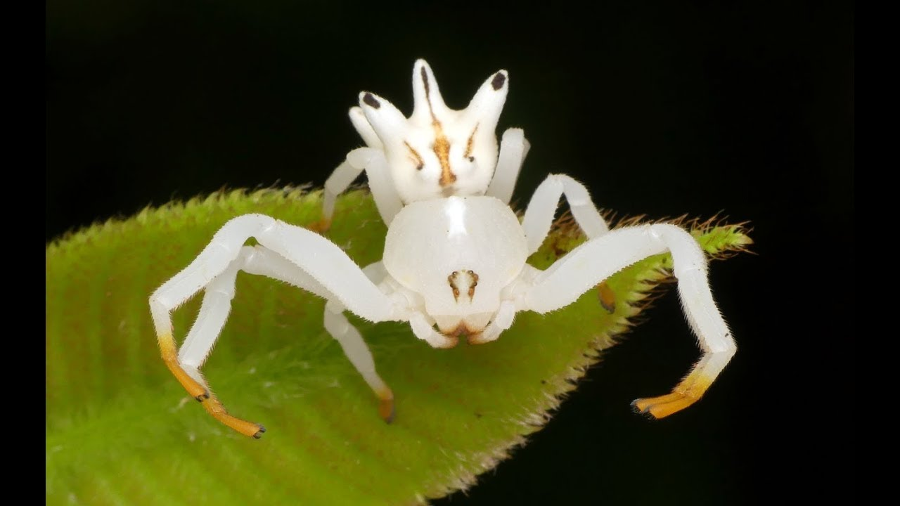 Image result for flower crab spider