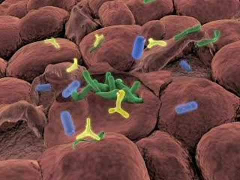 Probiyotik Nedir Ne İşe Yarar