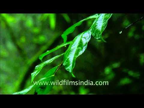 Tropical wilderness of Satara, Maharashtra