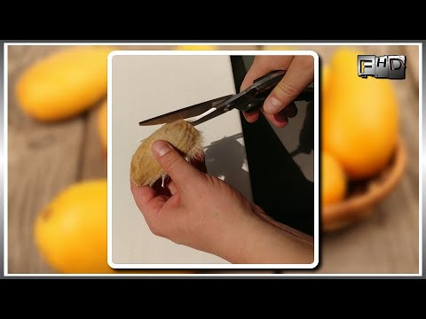 .:⭐:. Как вырастить дерево Манго из косточки в домашних условиях - (часть 1)