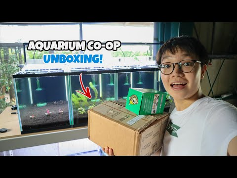 AQUARIUM CO-OP SENT ME THIS!! Every Fish Room Needs This!