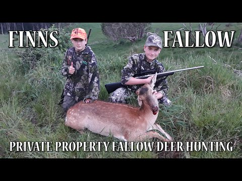 Finns Fallow  Private Property Fallow Deer Hunting