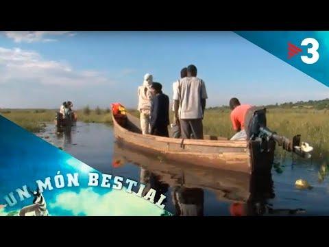 Un món bestial: Uganda