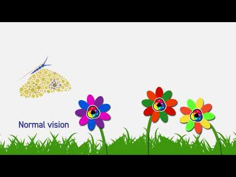 Colour Blind Awareness Day 2018