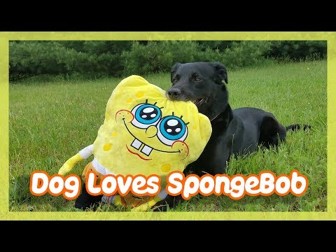 Dog Loves SpongeBob & Cute Cats !