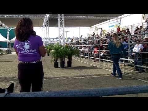 Terry Parrish Action K9 Sports-DM Fair
