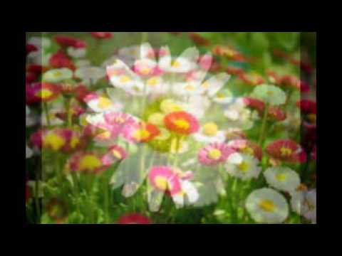 flowers-picture