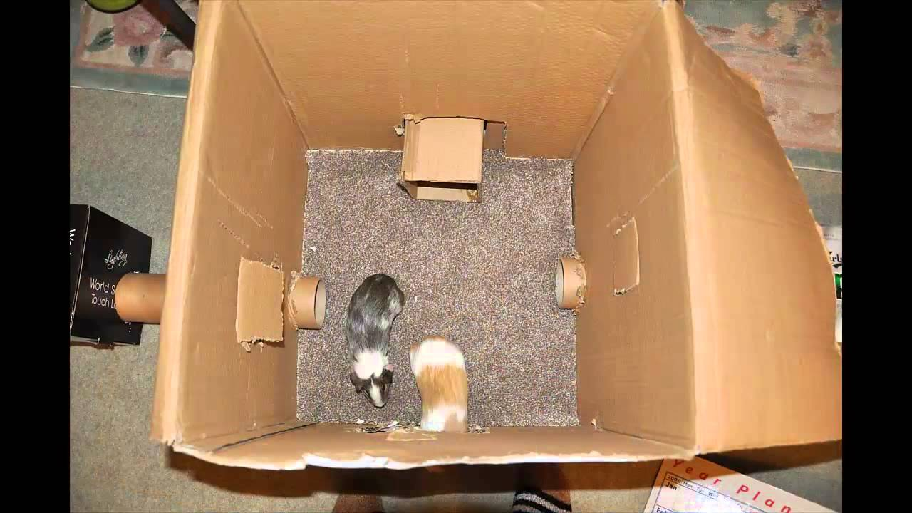 My Homemade Cardboard Playpen Youtube