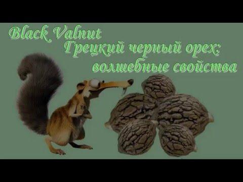 Черный грецкий орех  Black Walnut