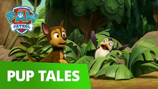 PAW Patrol | Pup Tales #48 | Rescue Episode!