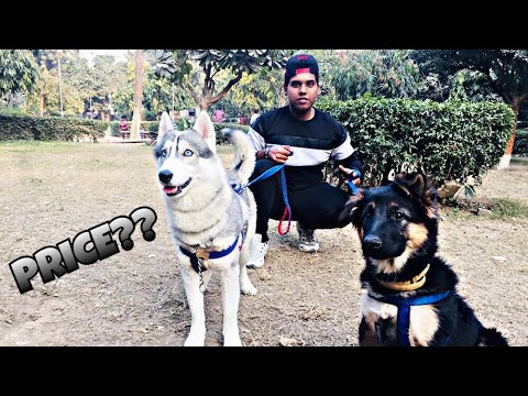 CHEAP DOGS MARKET | WHOLESALE , RETAIL | DOGS  IN CHEAP PRICE WITH PHONE NUMBER