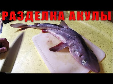 Разделка Акулы Катран (Dogfish Shark Cleaning)
