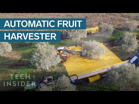 These Machines Shake Olives Off Trees And Collect Them In Giant Sheets