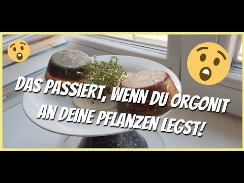 Lege Orgonit an deine Pflanzen! ???? Du glaubst nicht, was dann passiert! ???? (Selbstexperiment)