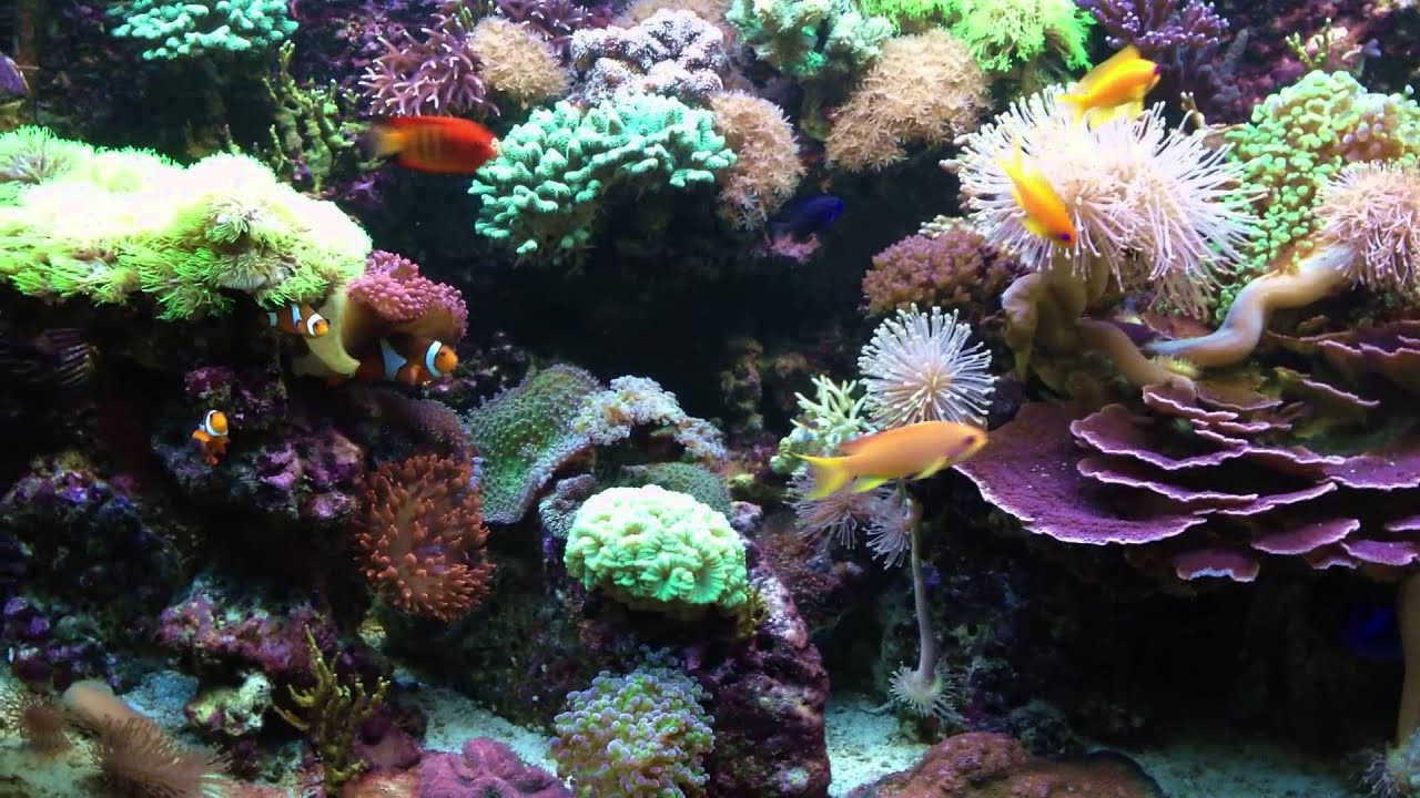 Iphone 5 Default Wallpaper Meerwasseraquarium Seewasseraquarium Reeftank Full