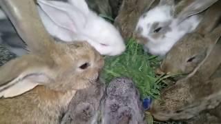 Крольчата едят первый раз в жизни травку.