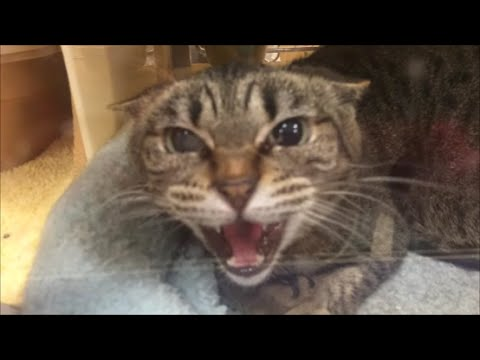 Crazy Angry Cat Locked Up | Hissing & Attacking!!!