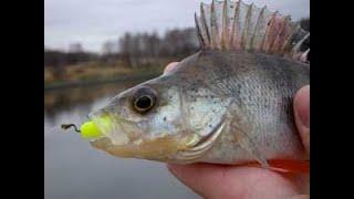 ЛОВЛЯ ОКУНЯ НА СПИННИНГ Crazy Fish Inspire НА ОТВОДНОЙ ПОВОДОК