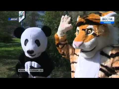 Владивосток готовится отметить День тигра