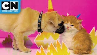 Gumball and Unikitty as real life kitties | Cartoon Network