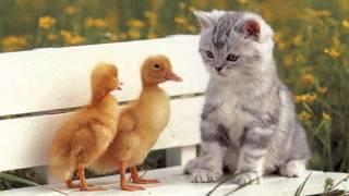 Клип про животных (оригинал)