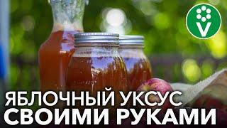 САМЫЙ ПРОСТОЙ РЕЦЕПТ ЯБЛОЧНОГО УКСУСА! Понадобятся только яблоки