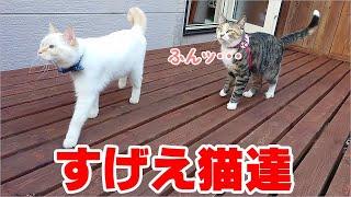外でもおやつをねだる猫と、どこでもお手をする猫