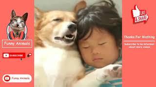 Funny Animals | 10 Minutes