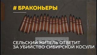 Браконьера из алтайского села будут судить за убийство сибирской косули