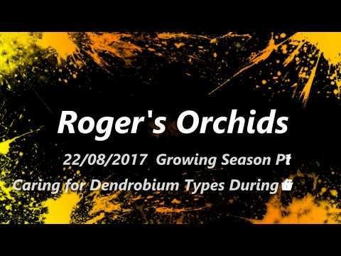 Growing Season Pt 1 Caring for Dendrobium Types During Growt