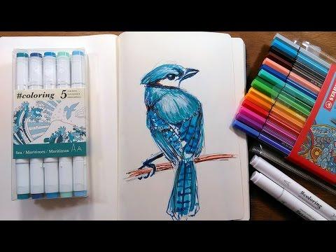Blue Jay In Markers Sketching Tutorial