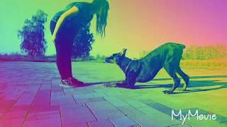 Dog tricks. Doberman 8 months / Доберман 8 месяцев. Прогулка, трюки