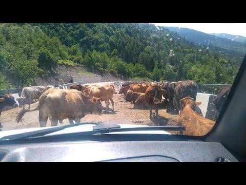 USHGULI Samochodem po Gruzji