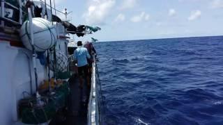 Download Video ABK.kapal ikan long line Tuna MP3 3GP MP4