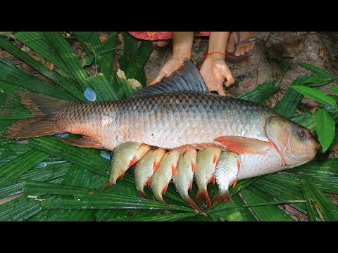 Unbelievable! Fishes In 25Kg Biggest Fish And Then Cooking In Forest
