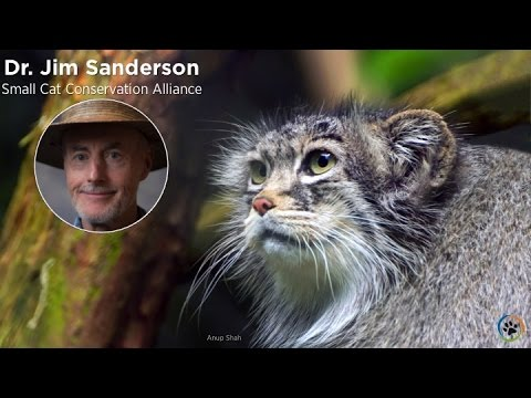Small Cat Conservation Alliance · Dr. James Sanderson · Expo 2014