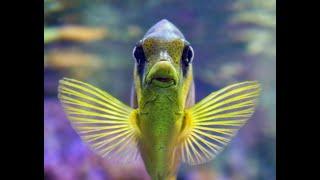Аквариумные рыбы Зачем рыбам плавники? Animals & fish