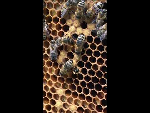 A Baby Bee - Inspiration for School Play, The Bee Musical, by Out of the Ark Music