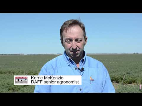 Over The Fence North: Narrow rows boost Dalby chickpea yields