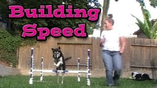 Building Speed: Agility Dog Training