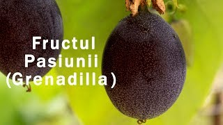 Cum se mananca fructul pasiunii, marquisa, marakuja, sweet grenadilla