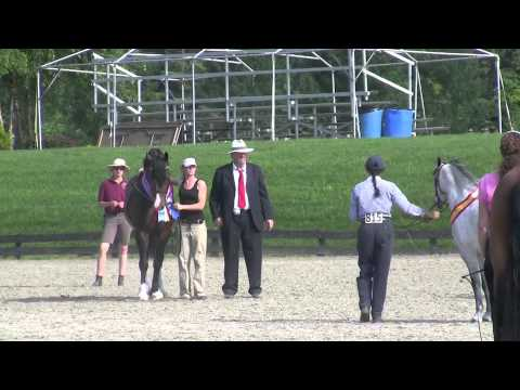 Quillane Welsh Cobs - NEWPA- Ponies on the Hudson 2011